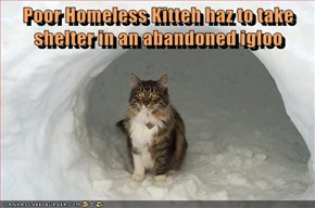 Poor Homeless Kitteh haz to take shelter in an abandoned igloo
