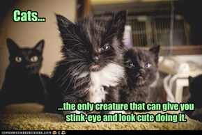 Cats...the only creature that can give you stink-eye and look cute doing it.