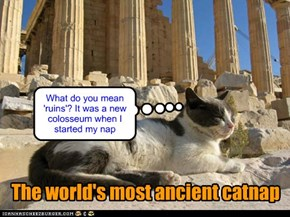 The world's most ancient catnap