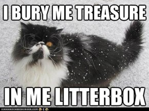 Pirate Cat: Can You Find the Buried Treasure?