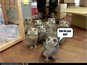 Owl do you do!!