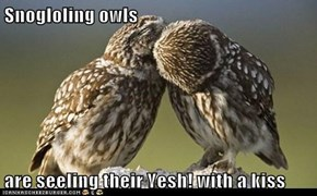 Snogloling owls  are seeling their Yesh! with a kiss