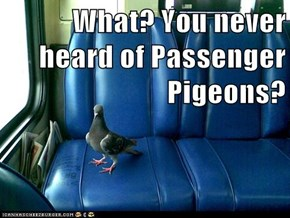 What? You never heard of Passenger Pigeons?