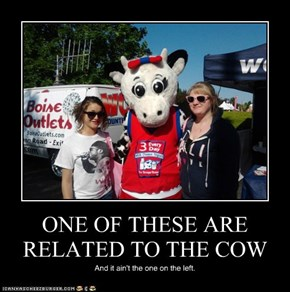ONE OF THESE ARE RELATED TO THE COW
