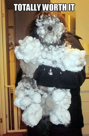 Beware the Abominable Snowdog!