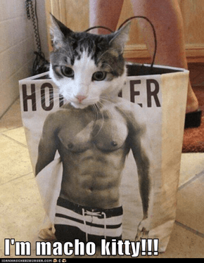 I'm macho kitty!!!
