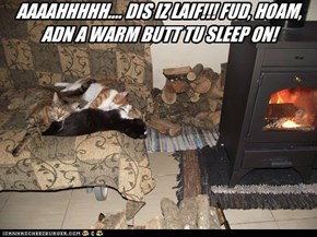 AAAAHHHHH.... DIS IZ LAIF!!! FUD, HOAM, ADN A WARM BUTT TU SLEEP ON!