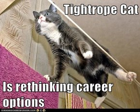 Tightrope Cat  Is rethinking career options