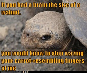 If you had a brain the size of a walnut,  you would know to stop waving your carrot-resembling fingers at me