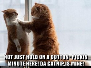 NOT JUST HOLD ON A COTTON~PICKIN MINUTE HERE! DA CATNIP IS MINE!