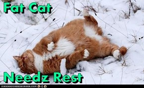 Fat Cat  Needz Rest