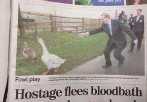 Run, Poultry, Run