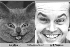 this kitten Totally Looks Like Jack Nicholson
