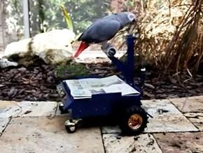 Around the Interwebz: My Bird's Whip is Better Than Yours