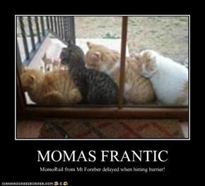 MOMAS FRANTIC
