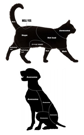 Petting Guide for Cats