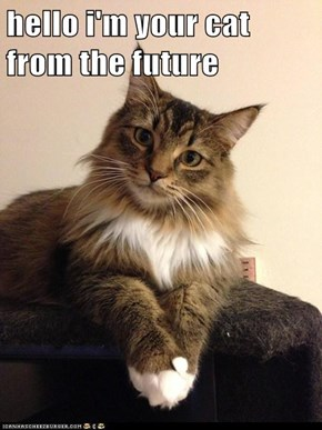 hello i'm your cat from the future