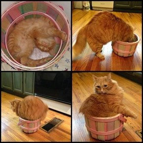 I Still Fits... Right?