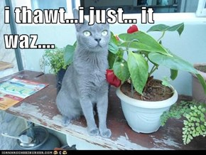 i thawt...i just... it waz....