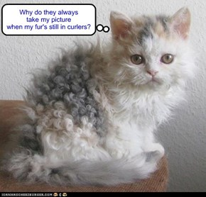 Why do they always take my picture when my fur's still in curlers?