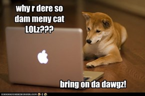 why r dere so dam meny cat LOLz???