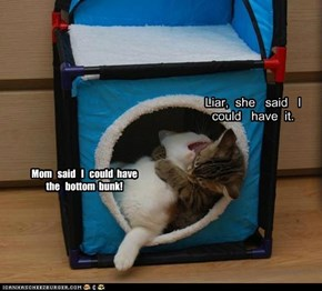 Mom   said   I   could  have   the   bottom  bunk!