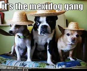 it's the mexidog gang