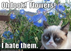 Oh look!  Flowers!  I hate them.