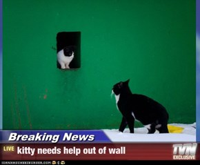 Breaking News - kitty needs help out of wall