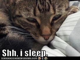 Shh, i sleep.