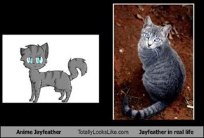 Anime Jayfeather Totally Looks Like Jayfeather in real life