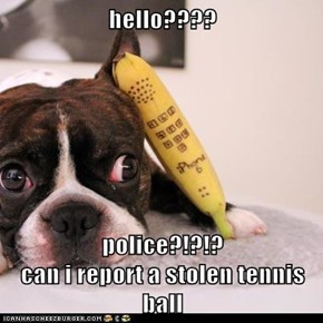hello????  police?!?!?                                  can i report a stolen tennis ball