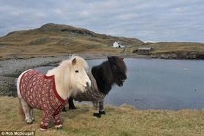 Shetland Ponies in Cute Cardigans