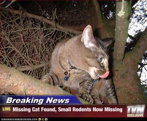 Breaking News - Missing Cat Found, Small Rodents Now Missing