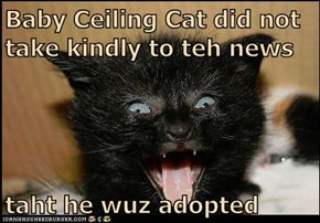 Baby Ceiling Cat did not take kindly to teh news  taht he wuz adopted