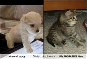this small puppy Totally Looks Like this ADORABLE kitten