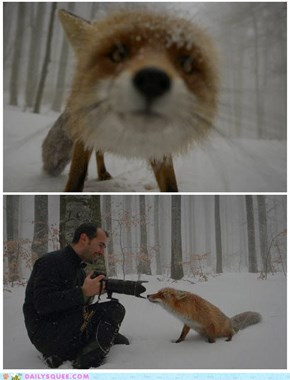 Curious Fox inspects Camera
