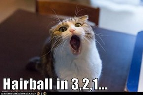 Hairball in 3,2,1...