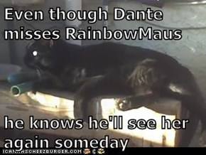 Even though Dante misses RainbowMaus  he knows he'll see her again someday