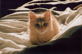 Cyoot Kitteh of teh Day: Who? Me?