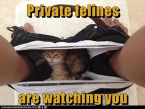 Private felines  are watching you