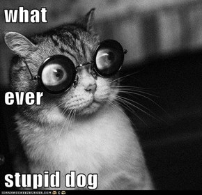what ever stupid dog