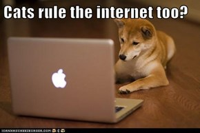 Cats rule the internet too?