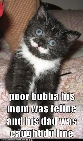 poor bubba his mom was feline and his dad was caught du line