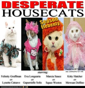 DESPERATE HOUSECATS - Season Elebenty - Box Set