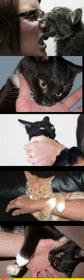 Nom Nom Nom: Kitty Loves You