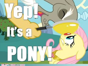 Yep! It's a Pony!