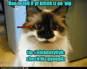 Kitteh pyoopilz shood NAWT b round!