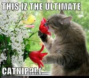 THIS IZ THE ULTIMATE   CATNIP?!:(