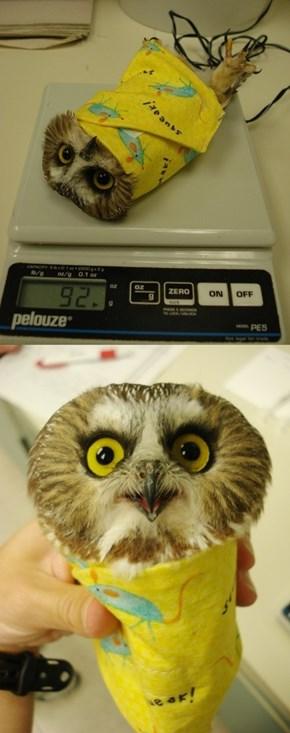 Owl Burrito!